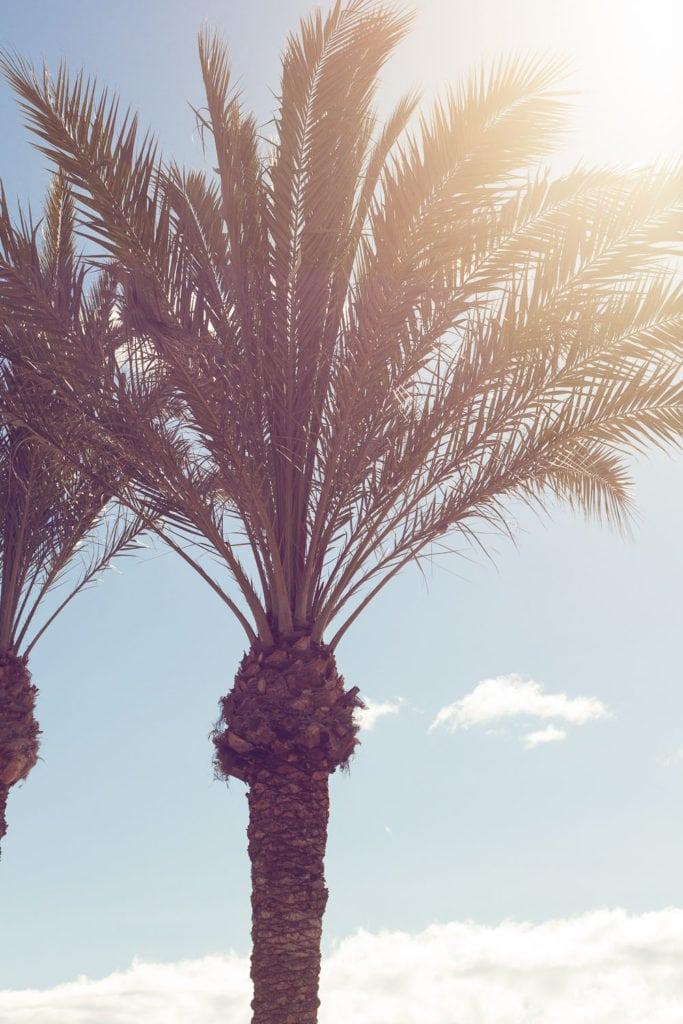 Reisebericht Süd Spanien - Entspannen an der Costa Blanca