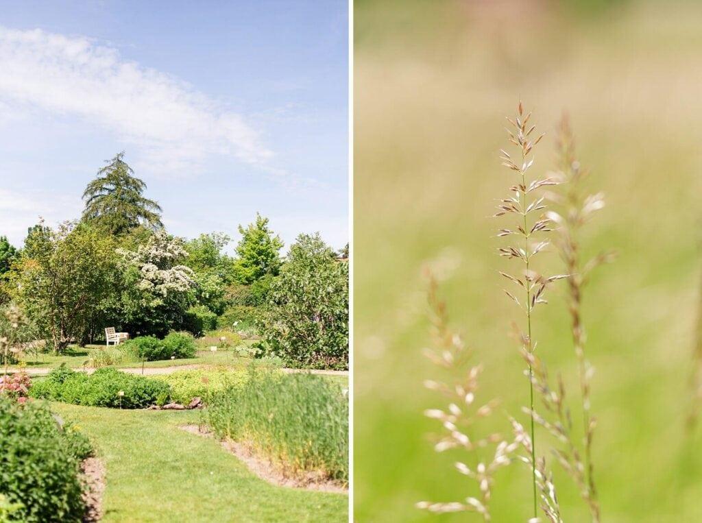 Ein Garten und Nahaufnahme eines Grashalmes