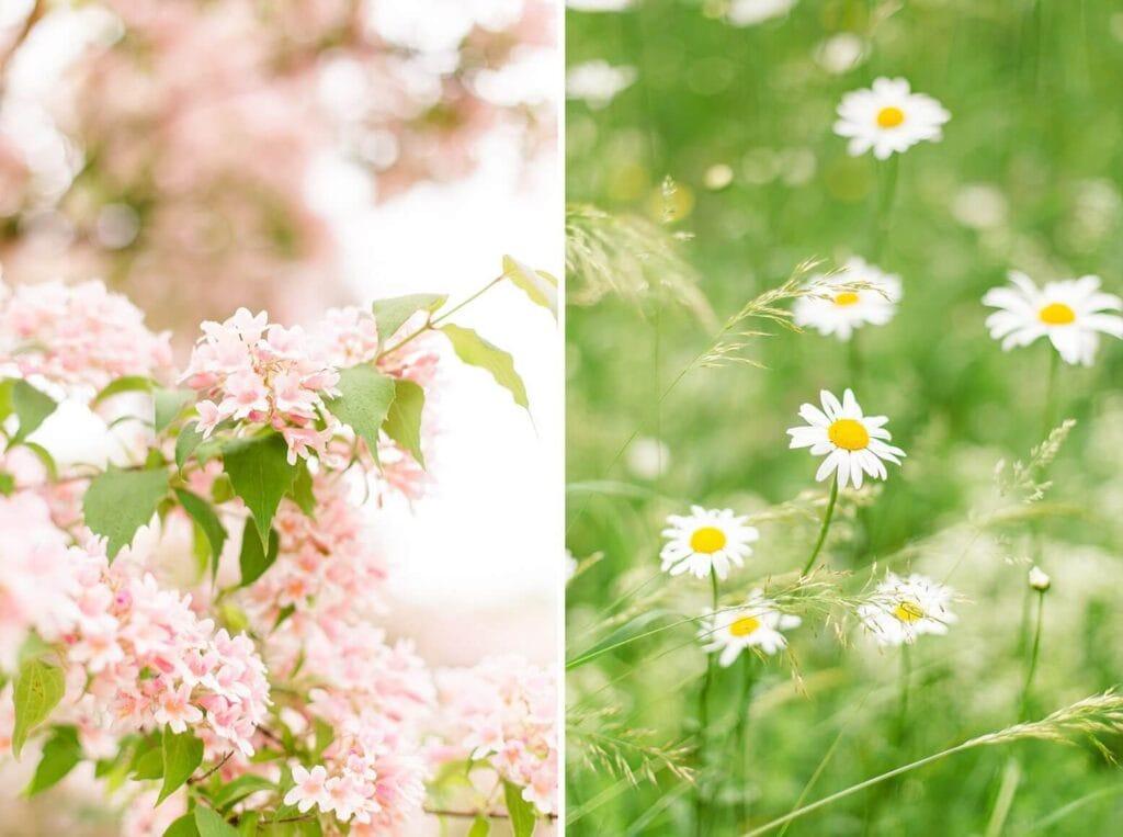 Blüten am Baum und Margeriten auf einer Wiese