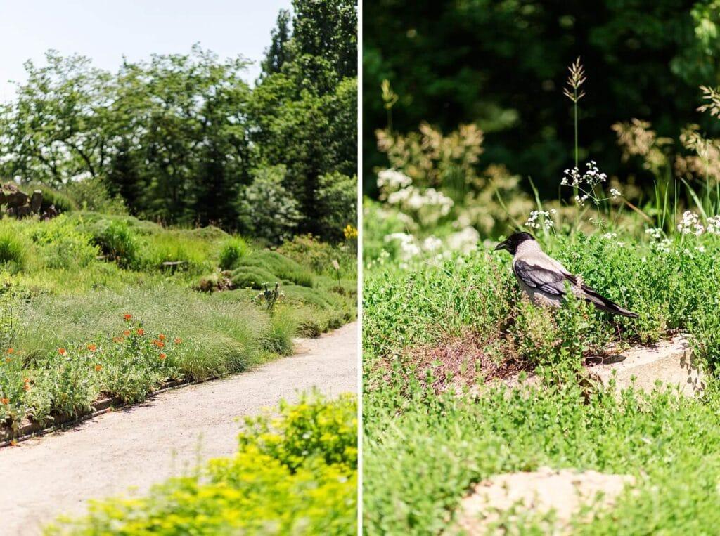 Ein Weg im Park und eine Krähe