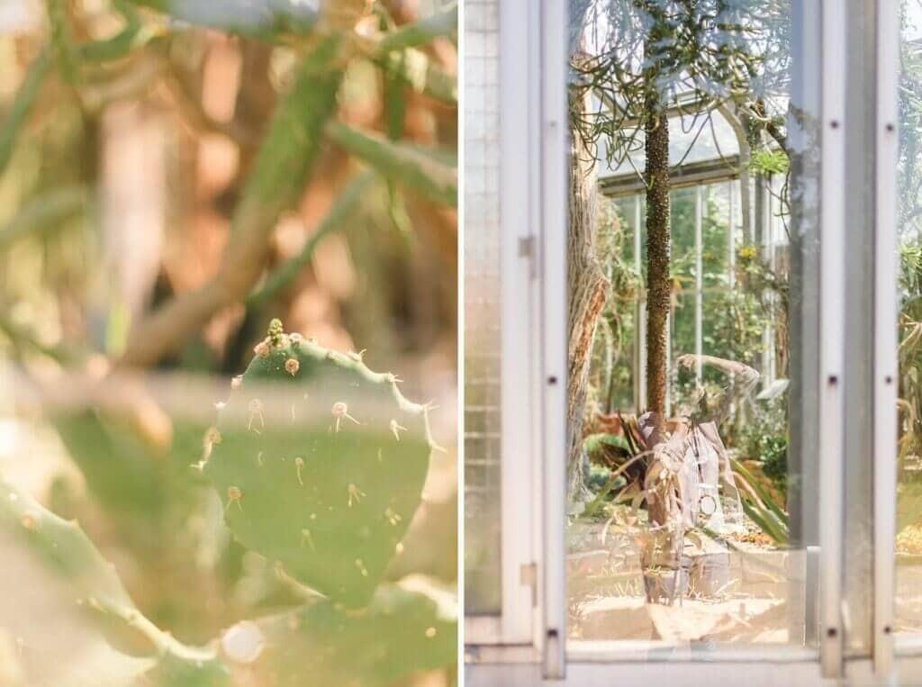 Ein Kaktus hinter einer Scheibe und die Spiegelung einer Fotografin in einer Scheibe