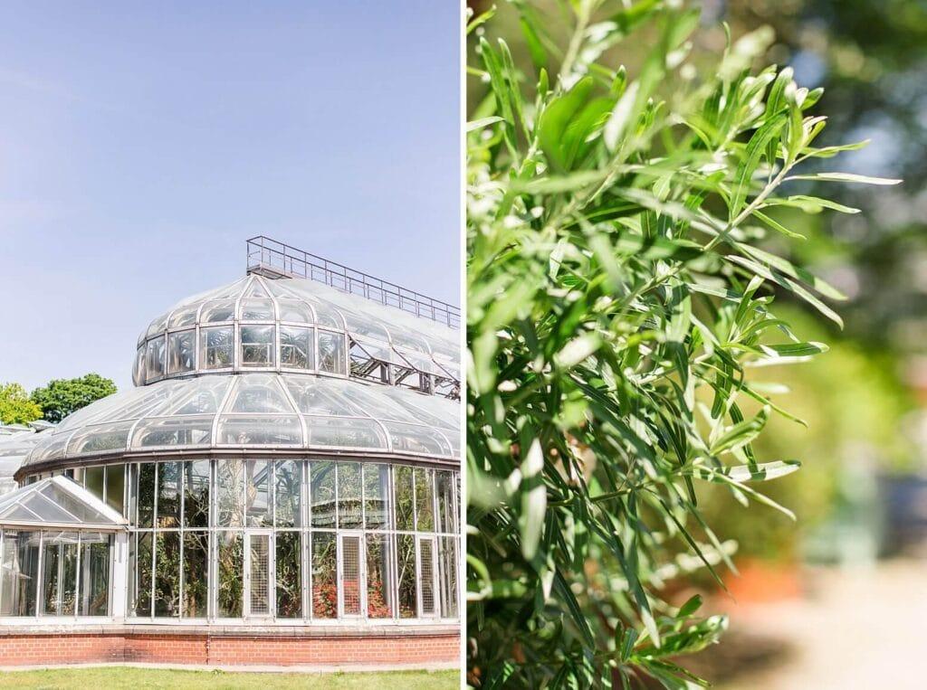 Außenaufnahme Gewächshaus und Nahaufnahme von Blättern