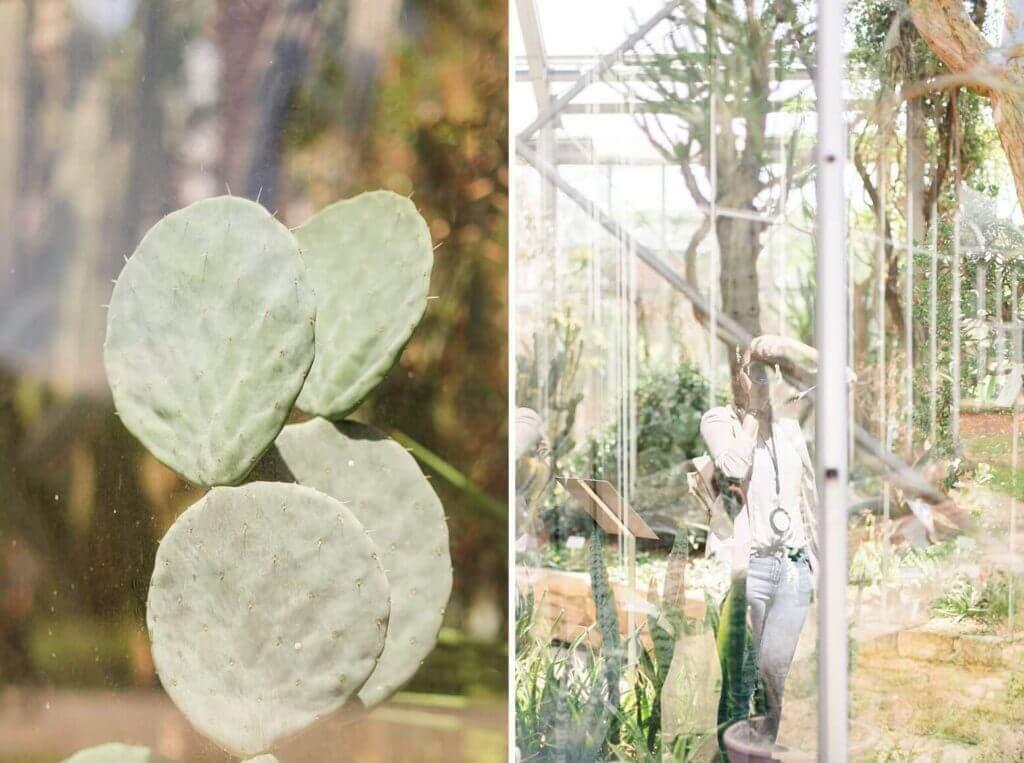 Kaktus hinter einer Scheibe und Spiegelung einer Fotografin