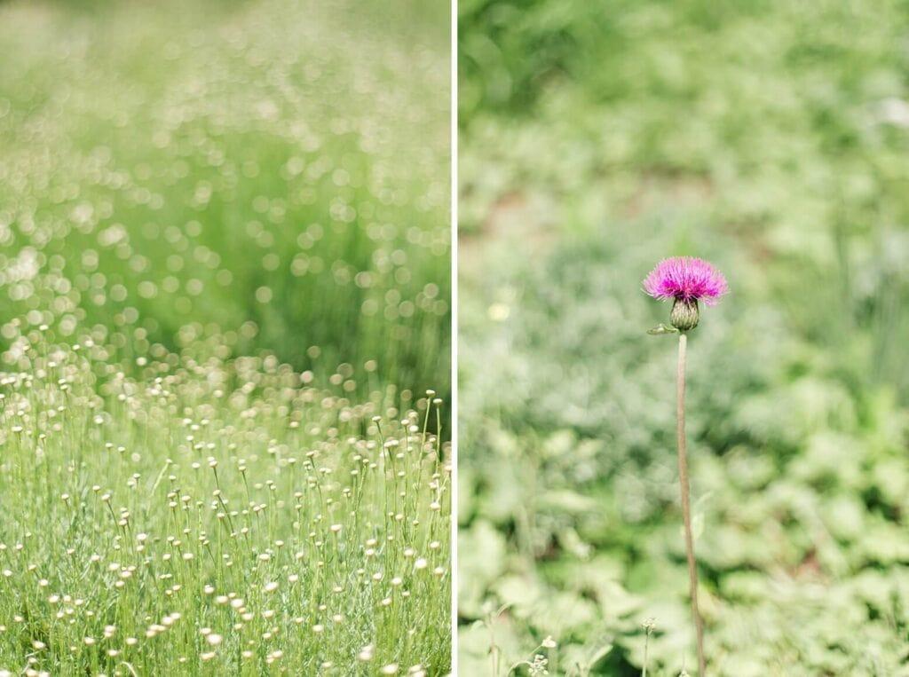 Kleine Blumen und eine Diestel