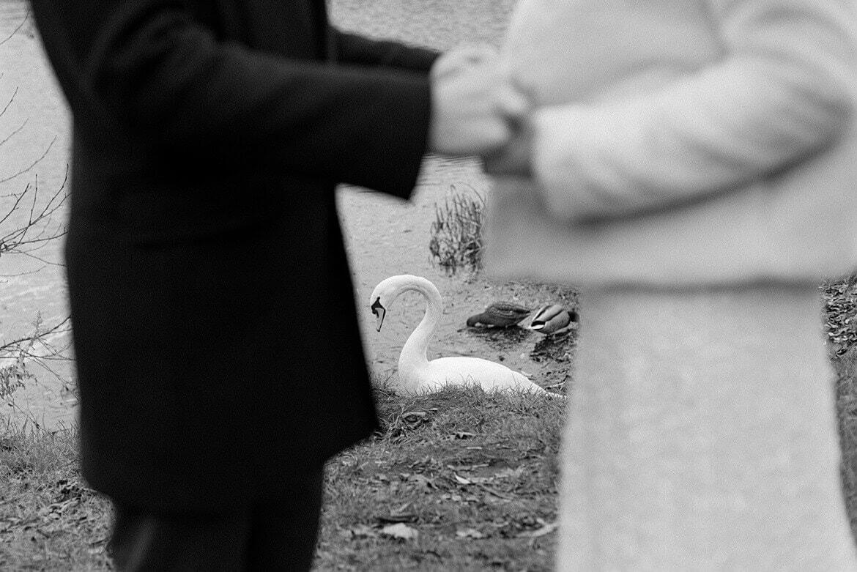 Schwarz Weiß Schwan hinter Brautpaar