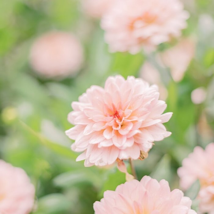 Blumen im Botanischen Garten